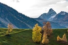 De herfst in Davos Grisons Switzerland, gele gekleurde bomen royalty-vrije stock afbeeldingen