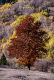 De herfst in de aard royalty-vrije stock afbeelding