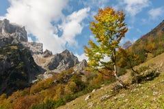 De herfst in de Beierse Alpen Stock Fotografie