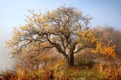 De herfst in de bergen Stock Foto's