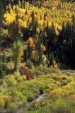 De herfst in de bergen van Utah Royalty-vrije Stock Afbeelding