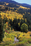 De herfst in de bergen van Utah royalty-vrije stock foto's