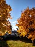 De herfst in de binnenplaats stock afbeelding