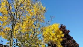 De herfst in de blauwe hemel stock afbeeldingen