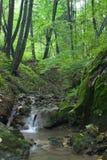 De herfst in de bossen Stock Fotografie
