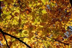 De herfst/de daling doorbladeren. Stock Afbeeldingen