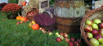 De herfst de decoratie, rode en groene appelen in een rieten mand op stro, pompoenen, pompoen, heidebloemen en chrysant bloeit Royalty-vrije Stock Afbeeldingen