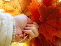 De herfst in de hand stock afbeeldingen