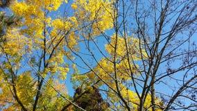 De herfst in de hemel Stock Foto's