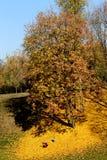 De herfst in de natuurlijk-historische reserve Tsaritsyno in Moskou Royalty-vrije Stock Foto