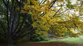 De herfst in de Oekraïne Stock Afbeeldingen