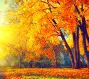 De herfst De scène van de dalingsaard Herfst park Royalty-vrije Stock Foto's