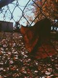 De herfst in de stad Stock Afbeelding
