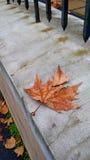 De herfst in de stad Royalty-vrije Stock Afbeeldingen