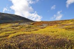 De herfst in de struik van Bergen Royalty-vrije Stock Afbeelding