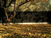 De herfst in de tuin stock foto's