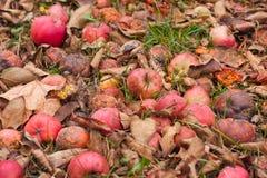 De herfst in de Tuin Stock Fotografie