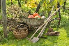 De herfst in de Tuin Stock Foto