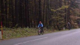 De herfst De weg door het bos stock video