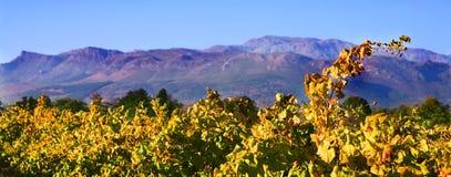 De herfst in de wijngaarden Royalty-vrije Stock Afbeelding