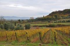 De herfst in de wijngaarden stock afbeelding