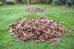 De herfst of de winterbladeren in grote stapels op gras worden geveegd dat royalty-vrije stock afbeelding