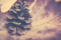 De herfst - Denneappel op een droog esdoornblad, uitstekende stijl Stock Foto