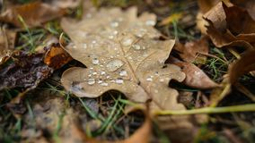 De herfst in detail stock footage