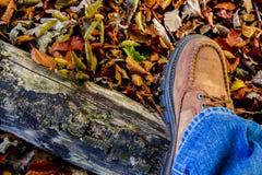 De herfst die over veel gebladerte wandelen royalty-vrije stock foto's