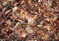 De herfst dode bladeren achter de omheining van het metaalnet Stock Afbeelding