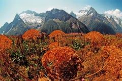 De herfst in Dombai. Stock Foto's