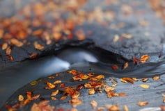 De herfst door de beek, ondiepe diepte van gebied, mooi onduidelijk beeld Royalty-vrije Stock Foto's