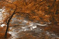 De herfst door een rivier Royalty-vrije Stock Foto's
