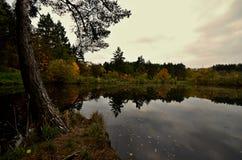 De herfst door het water Stock Afbeelding