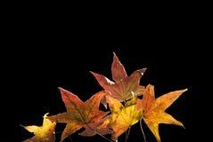De herfst doorbladert Stock Afbeeldingen