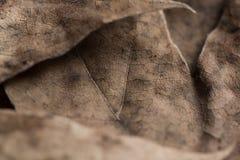 De herfst doorbladert achtergrond Royalty-vrije Stock Fotografie