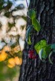 De herfst doorbladert bij zonsondergang Stock Fotografie