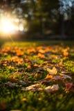 De herfst doorbladert bij zonsondergang Royalty-vrije Stock Foto