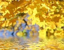 De herfst doorbladert boven het water Royalty-vrije Stock Afbeeldingen