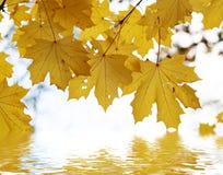 De herfst doorbladert boven het water Stock Afbeeldingen