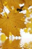 De herfst doorbladert boven het water Royalty-vrije Stock Fotografie