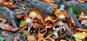 De herfst doorbladert en schiet, regenboog van kleur als paddestoelen uit de grond royalty-vrije stock afbeelding