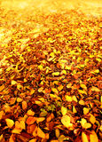 De herfst doorbladert in het bos Royalty-vrije Stock Afbeeldingen