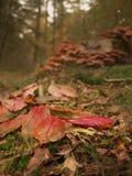 De herfst doorbladert op grond Stock Foto's