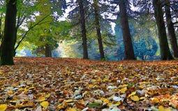 De herfst doorbladert, regenboog van kleur stock afbeeldingen