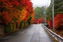 De herfst doorbladert rond bergopwaartse straat, Kawaguchiko Stock Foto's
