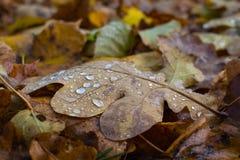De herfst doorbladert ter plaatse Stock Foto's