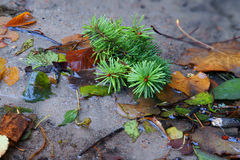 De herfst doorbladert in waterkreek stock afbeeldingen