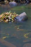 De herfst doorbladert in waterkreek Stock Foto