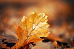 De herfst doorbladert de weg Moskou van de stadsstraat royalty-vrije stock afbeelding